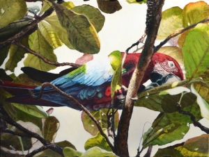 """Sunlit Green-Winged Macaw"""